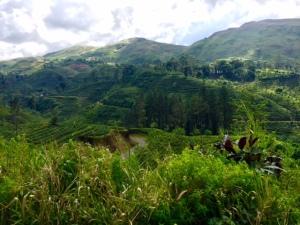 Taken from the train between Kandy and Nanu Oya